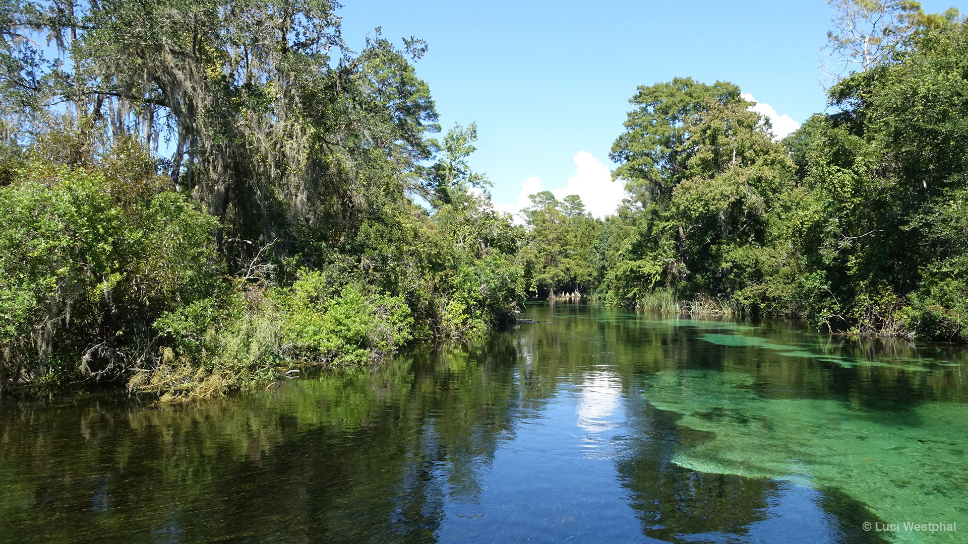 Weeki Wachee River in Hernando County, near the west coast of Florida